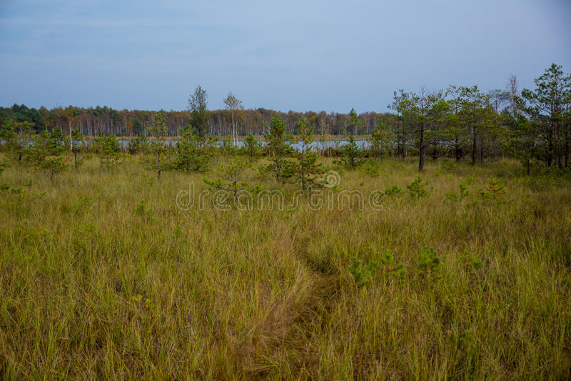 Perennial grasseson wetlands stock photo