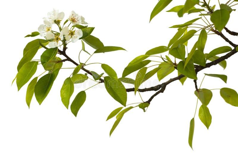 Perentak met bloemen stock afbeeldingen