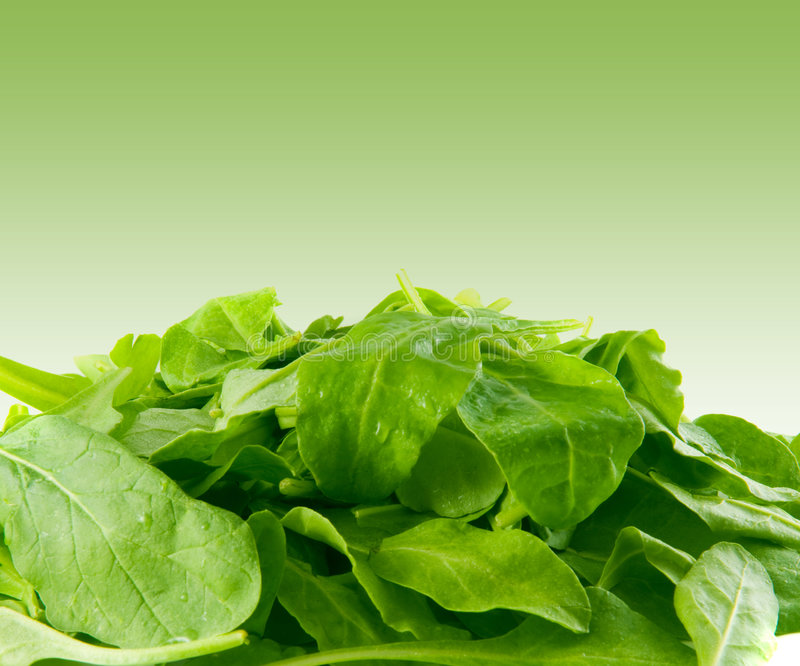 Perfect baby spinach greens stock photo