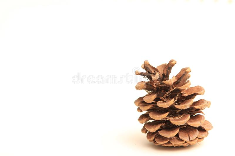 Lonesome pine cone sitting and waiting for text to be applied around it. royalty free stock photos