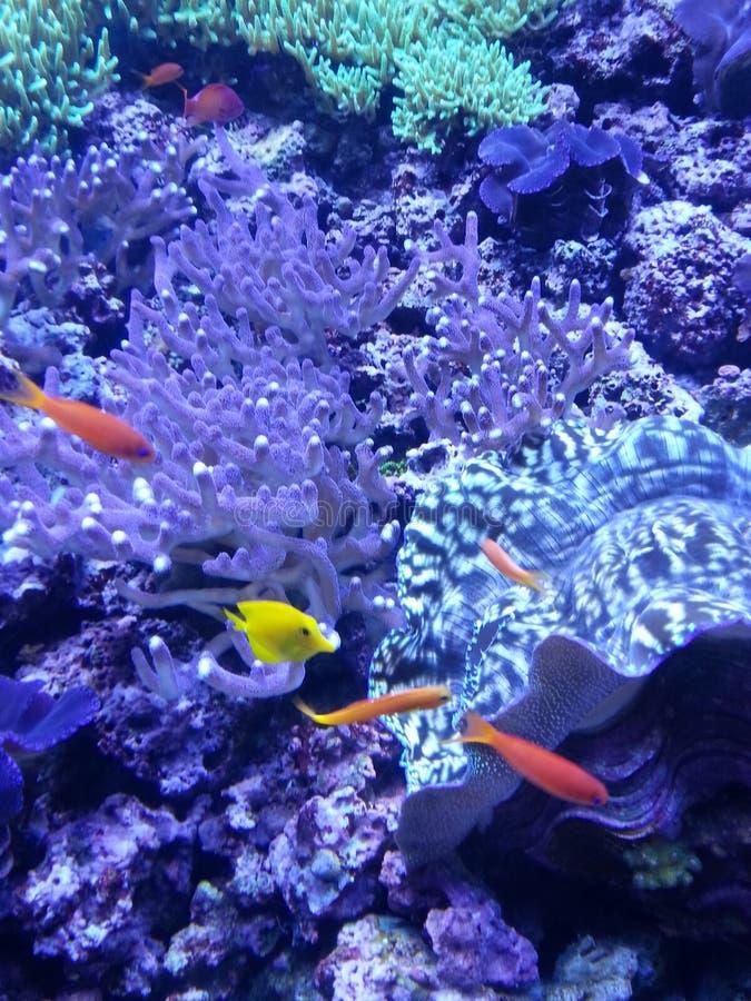 Perfect beeld van onderwaterschepsel stock foto