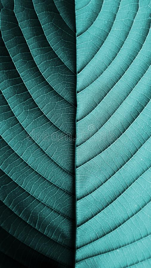 Perfect blue leaf patterns. - closeup. Perfect blue leaf patterns. - nature concept royalty free stock photo