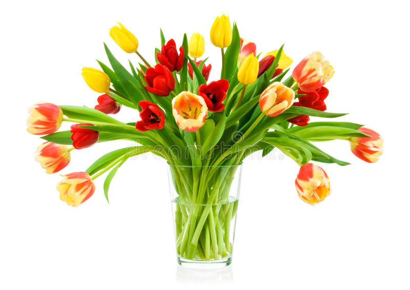 Perfect bouquet of tulips in a vase. Neat bouquet of colorful tulips in a clear glass vase, isolated on white stock photography