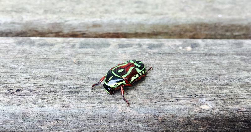 Perfect bug royalty free stock images