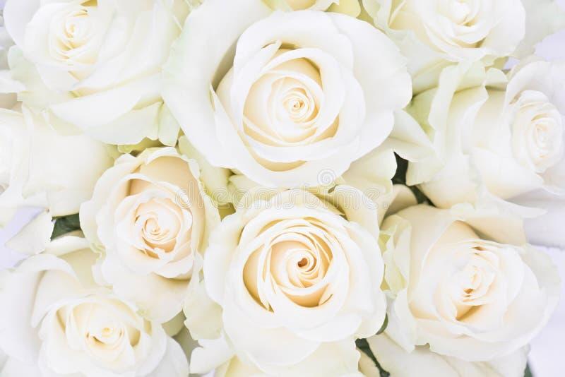 Perfect bukiet creme luksusowe róże dla poślubiać, urodziny lub walentynki ` s, dzień Odgórny widok obraz royalty free