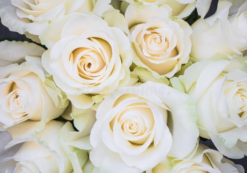Perfect bukiet creme luksusowe róże dla poślubiać, urodziny lub walentynki ` s, dzień Odgórny widok zdjęcie stock