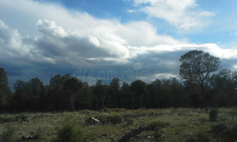 A perfect center. A big tree above the small trees royalty free stock photos