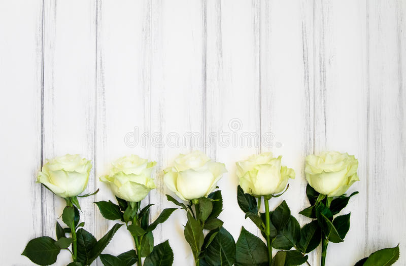 Perfect creme luxurious roses on the tabcke for wedding, birthday or Valentine`s day. Top view stock photography