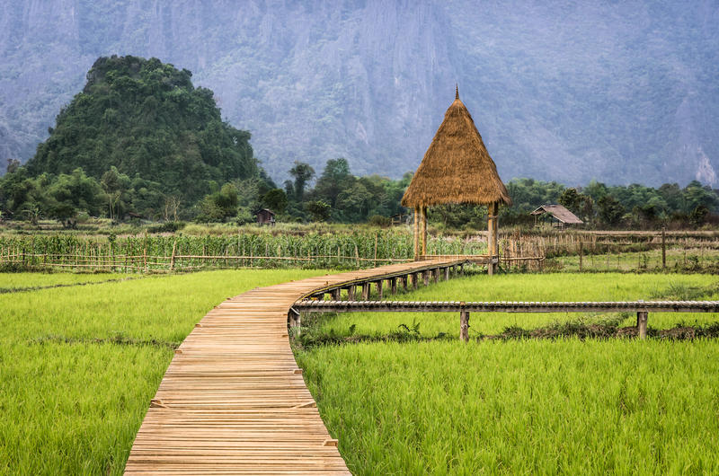 Rice Paddy Field - Walkway to the Hut. Perfect example of the third's rule with the walkay to the hut in a rice paddy field in Vang Vieng, Laos stock image