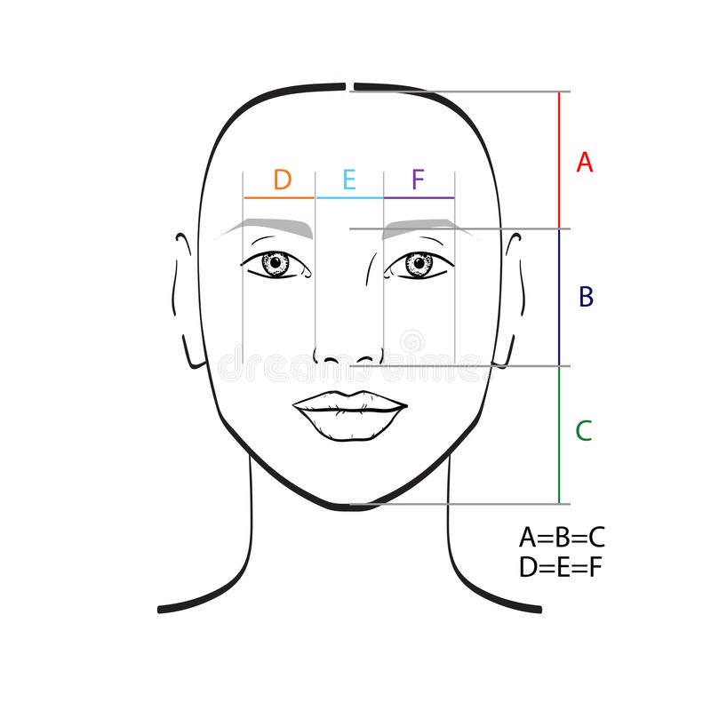 Perfect face proportions. Vector illustration stock illustration