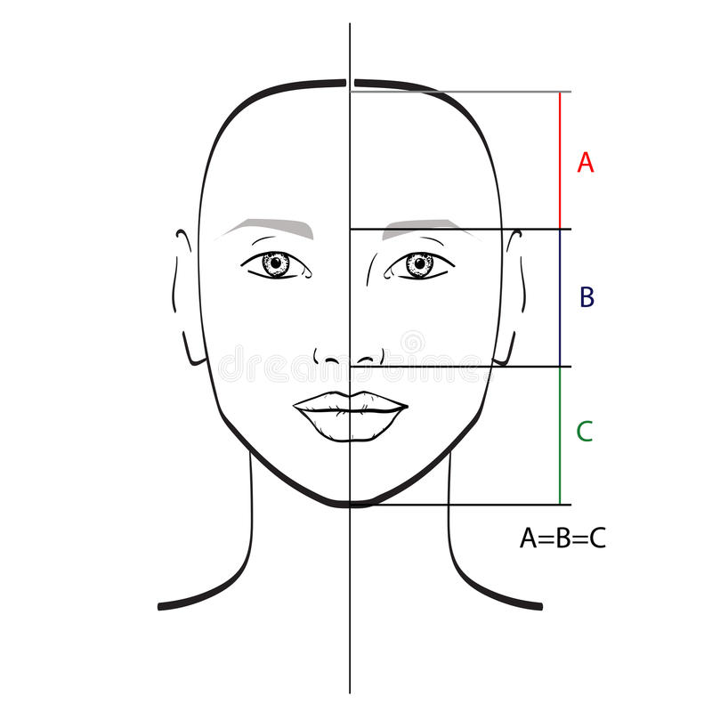 Perfect male face proportions