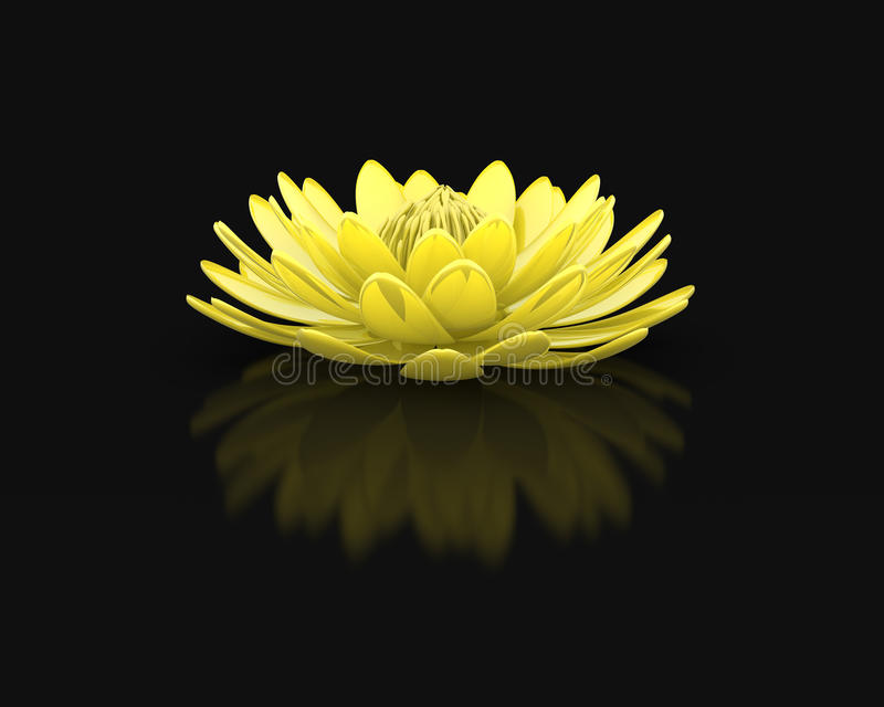 Golden lotus flower water lily. Isolated blooming gold lotus flower. Metaphor for purity, wisdom, religious and cultural background stock illustration