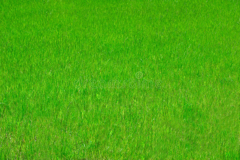 Perfect grass. Excellent texture of perfect spring grass royalty free stock photos