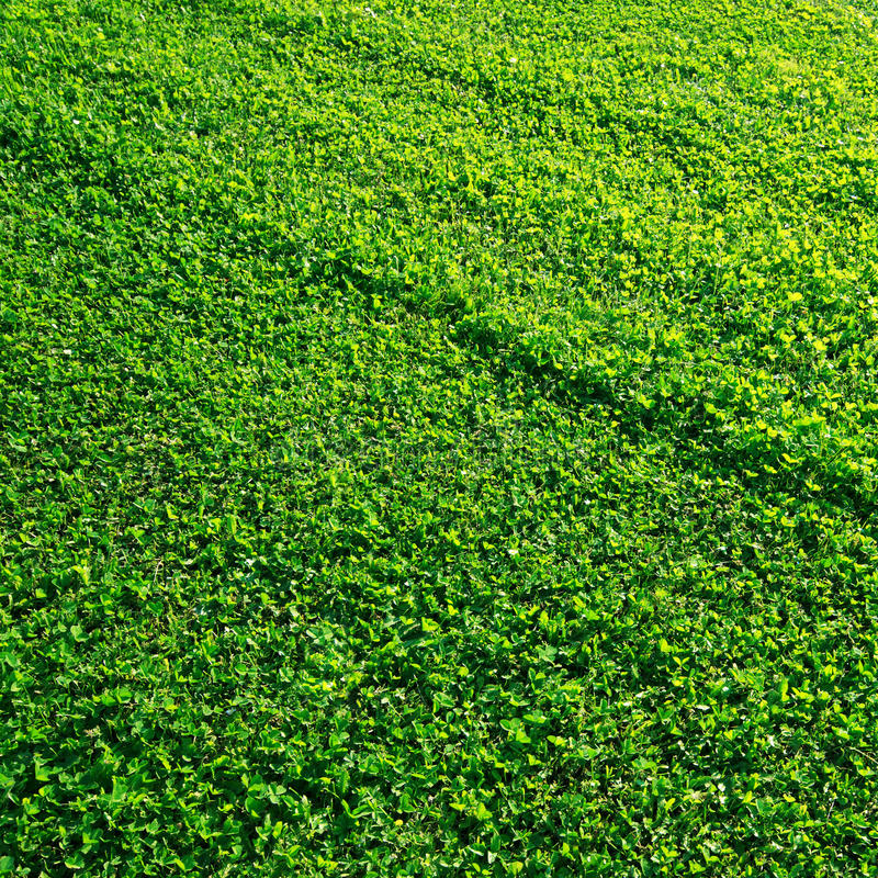 Download Perfect green grass stock image. Image of close, gardening - 26129193