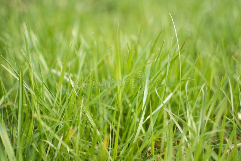 Perfect fresh spring green grass. royalty free stock photography