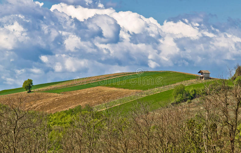 Download Perfect Green Hill With Vineyard And Lodge Stock Photo - Image: 21368126