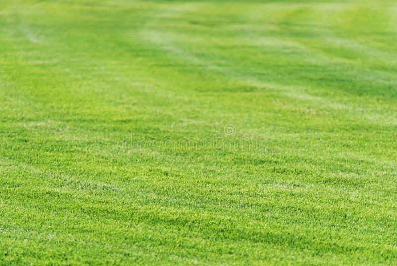 Perfect mowed green grass lawn background. stock photo
