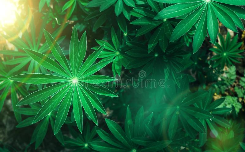 Perfect natural fresh grass pattern background. Sun beams with bokeh. Top view. Copy space stock photos