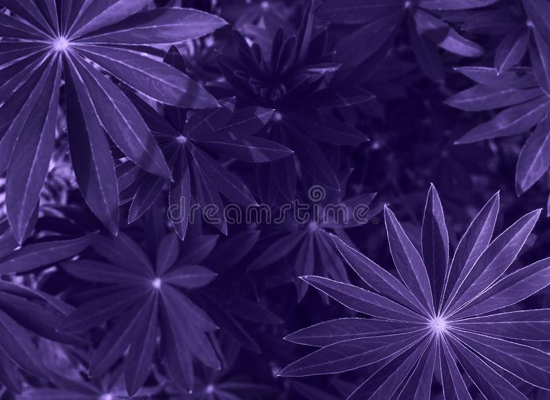 Perfect natural fresh grass pattern background. Ultra Violet dark and moody backdrop for your design. Top view. Perfect natural fresh grass pattern background royalty free stock photos