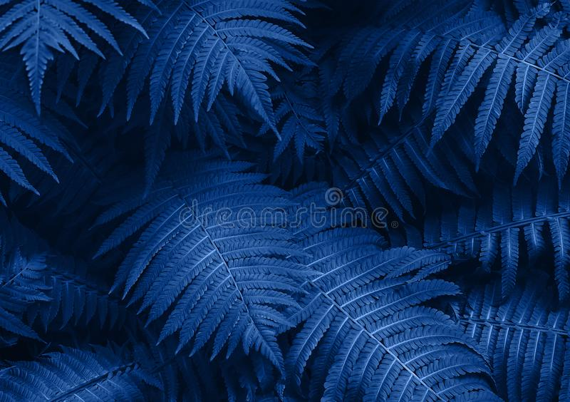 Perfect natural young fern leaves pattern background. Blue dark and moody backdrop for your design. Top view. royalty free stock photography