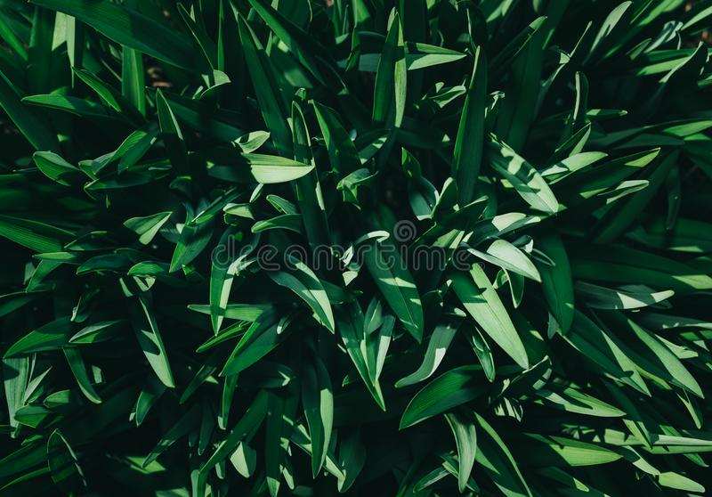 Perfect natural young grass pattern background. Dark and moody feel. Top view. Copy space royalty free illustration