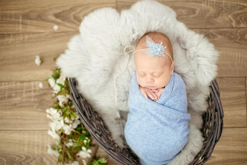 Perfect newborn baby girl in blue blanket in a wicker basket decorated with branches royalty free stock images