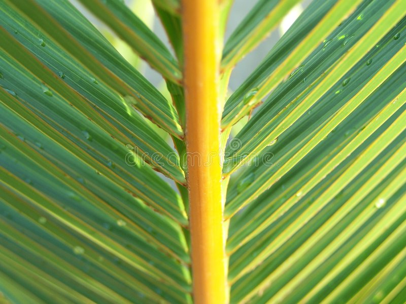 A Perfect Palm Leaf royalty free stock photos