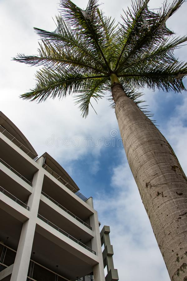 Perfect palm tree stands against blue sky and apartment block at Gateway in KZN South Africa stock photography