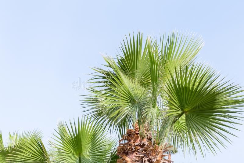 Perfect palm trees against a beautiful blue sky in sunny Egypt.  royalty free stock image