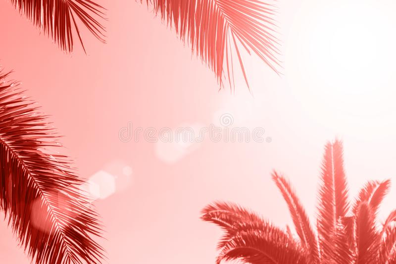 Perfect palm trees against a beautiful sky. Coral color background royalty free illustration