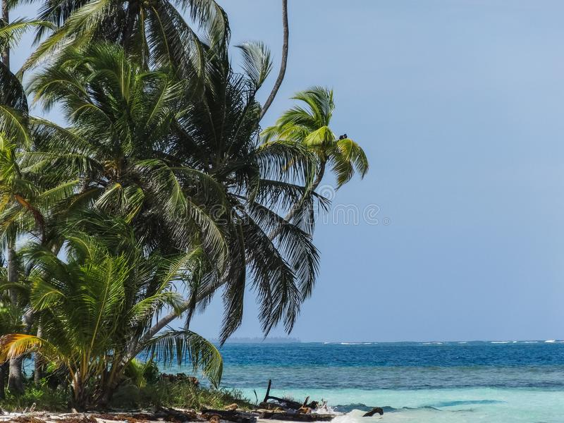 Perfect Paradise tropical beach with palms in panama stock image