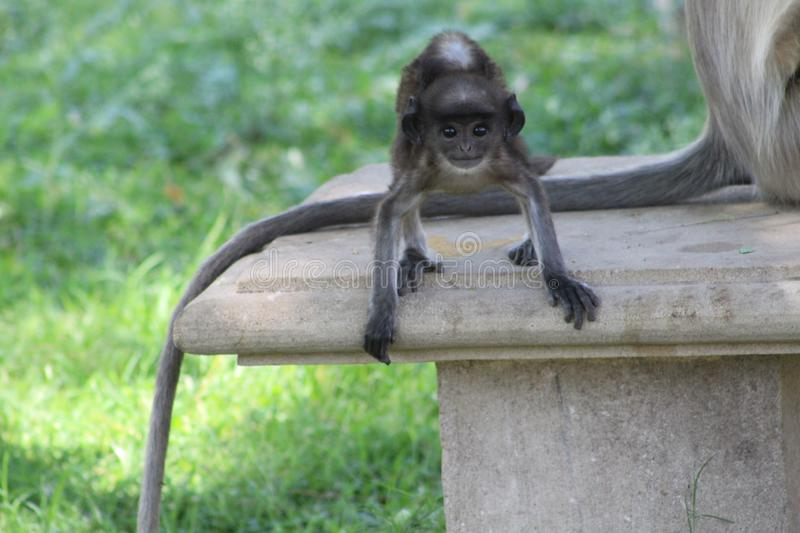 The perfect pose of baby monkey stock photography
