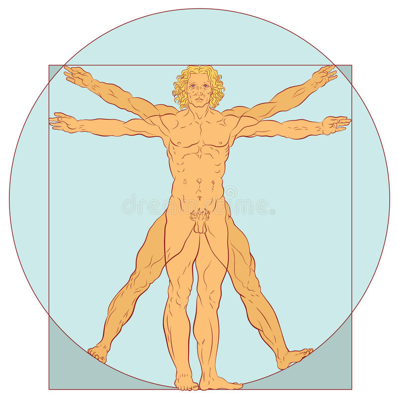Perfect Proportions. Illustration showing the proportions of a human adult male vector illustration