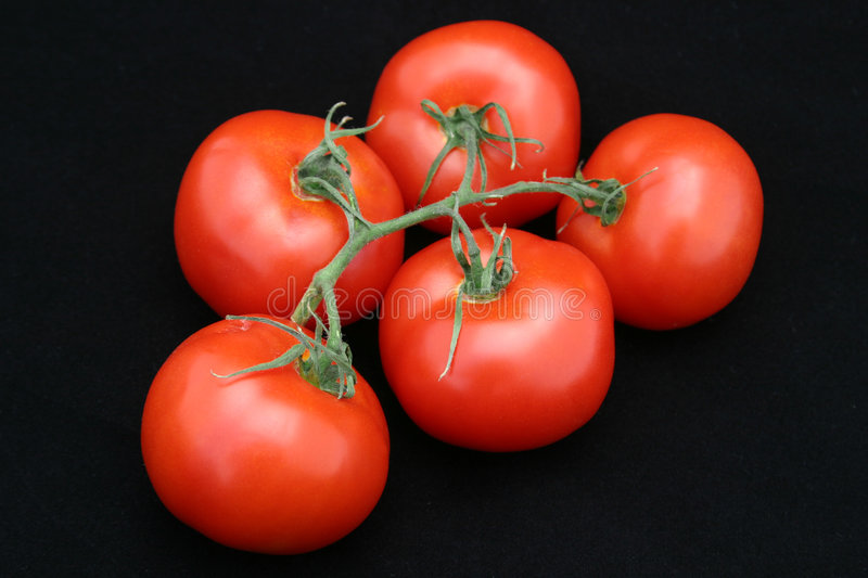 Perfect Red Tomato Bunch stock images