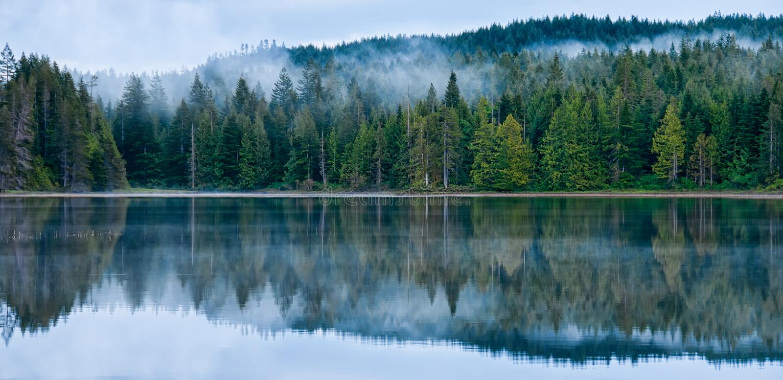 Perfect Reflection of Misty Forest in Lake royalty free stock photos