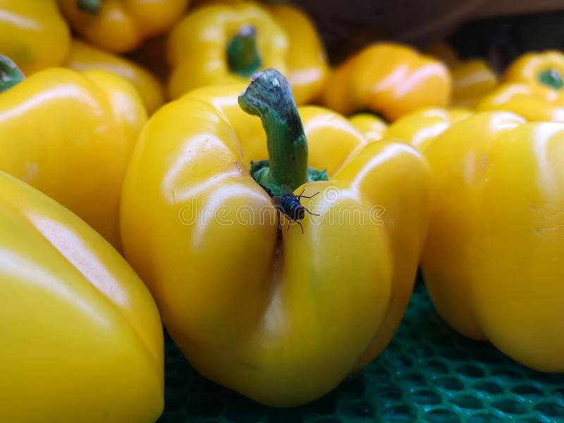 A perfect group of yellow bell peppers, if it weren`t for a fly visitor, which wouldn`t leave. royalty free stock photography