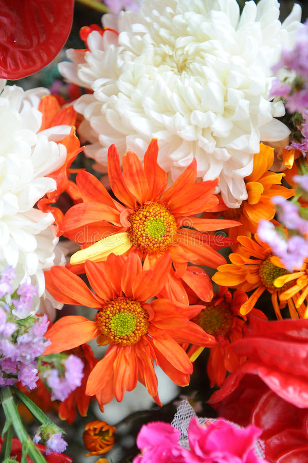 Free Perfect Spring Daisies Stock Photography - 21563822
