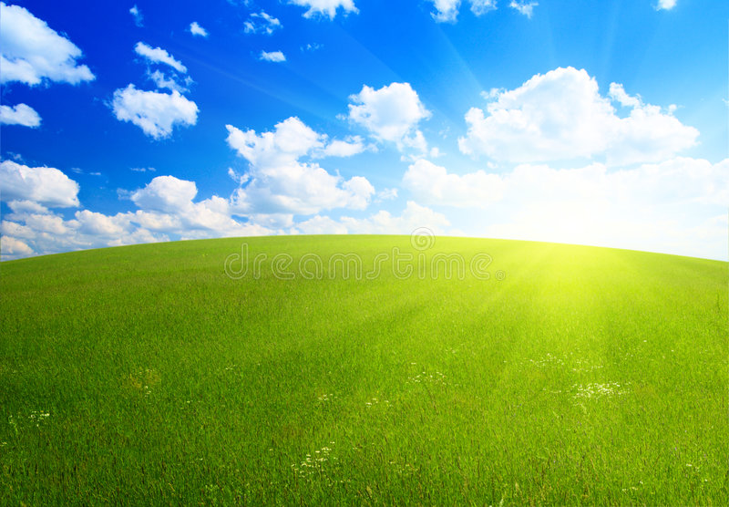 Perfect summer grass royalty free stock photo