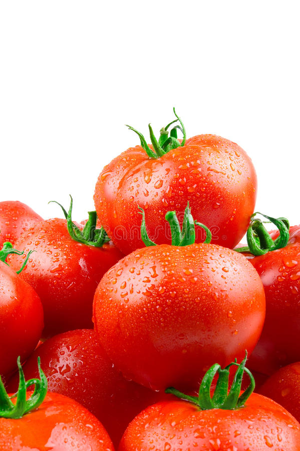 Free Perfect Tomatoes With Drops Of Water Stock Images - 15417624