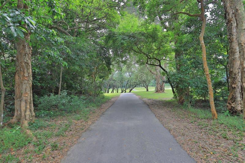 Perfect trawy pola golfowego pole przy hk fotografia stock