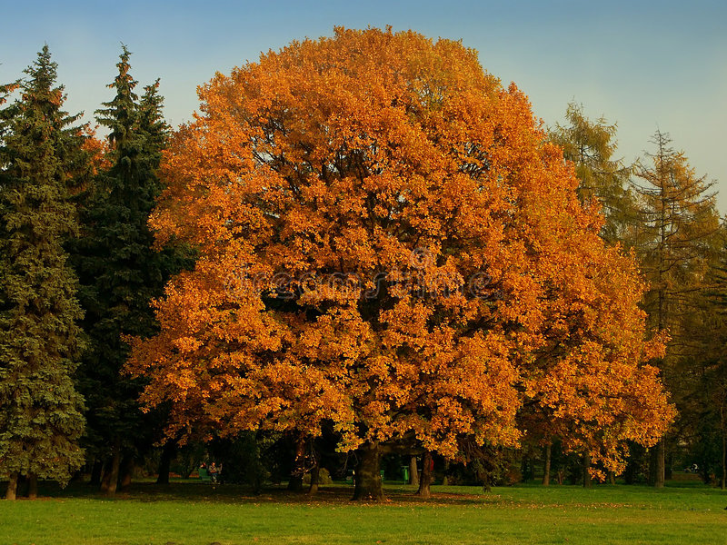 Perfect Tree Royalty Free Stock Images