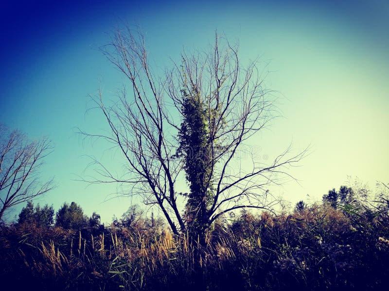 Perfect tree& x29; royalty free stock image