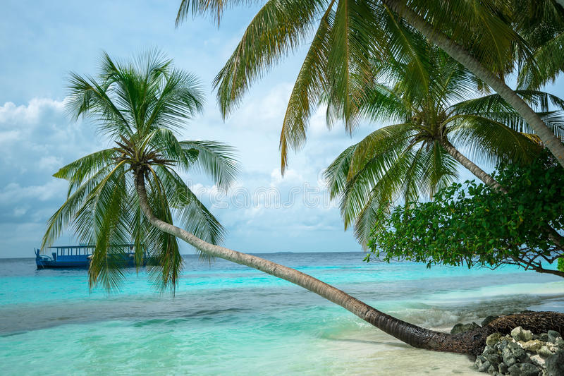 Download Perfect Tropical Island Paradise Beach Stock Photo - Image: 33267136