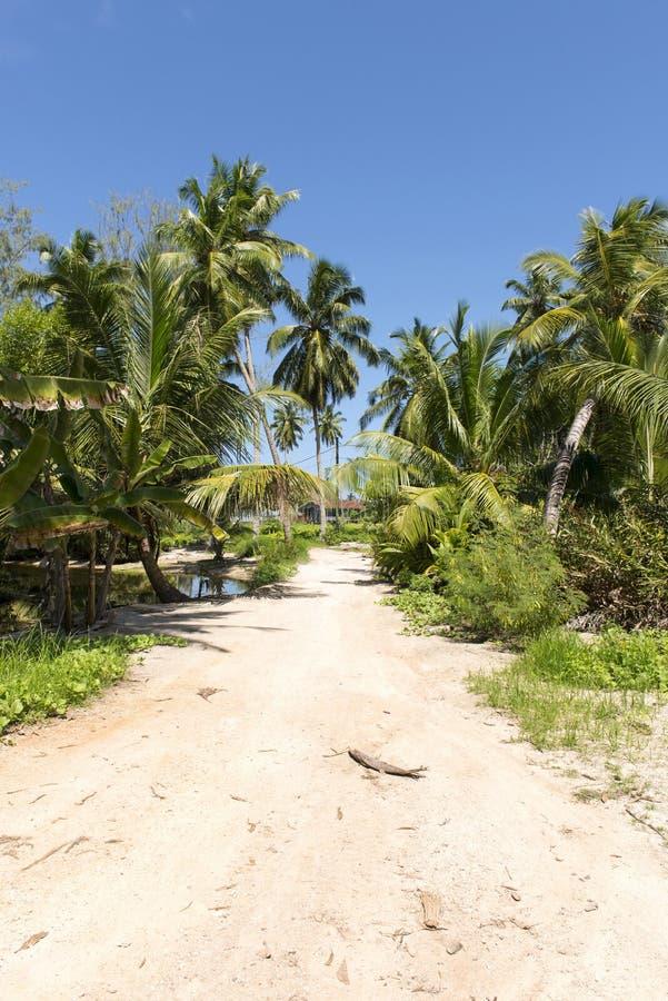Download Perfect Tropikalna Droga I Palmy Obraz Stock - Obraz złożonej z relaksuje, roślina: 28972193
