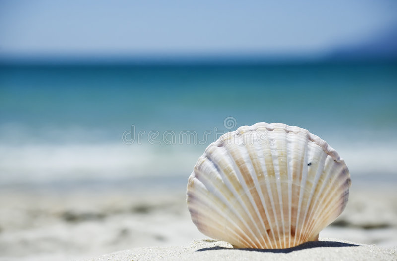 Perfect Vacation On The Beach Stock Photography