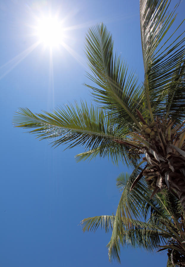 A Perfect Vacation With Sun And Coconuts Stock Photography