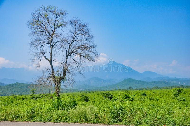The perfect view of a tree with hills and mountains stock image
