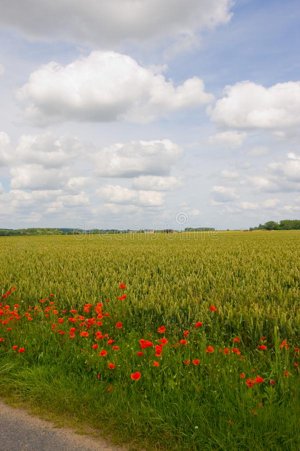 Perfect way - with poppies around. Beautiful landscape with field of red poppy flowers in Onzain - France royalty free stock image