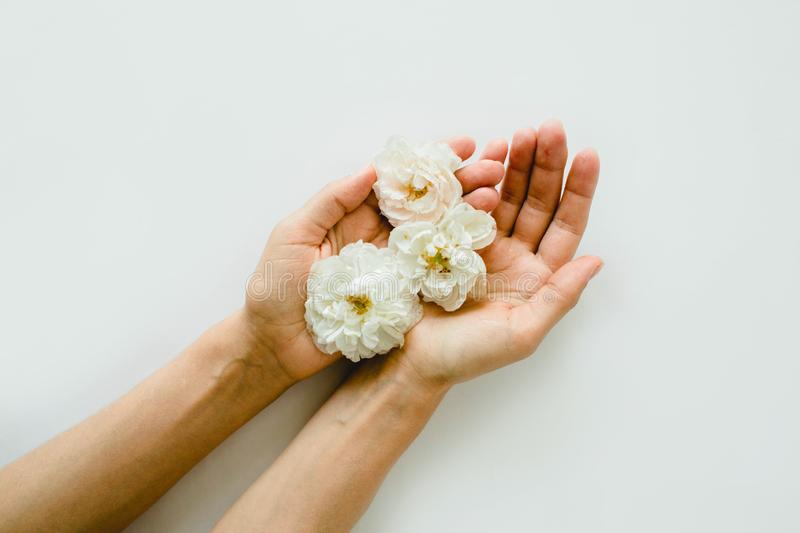 Perfect white roses in hands on white background royalty free stock photo
