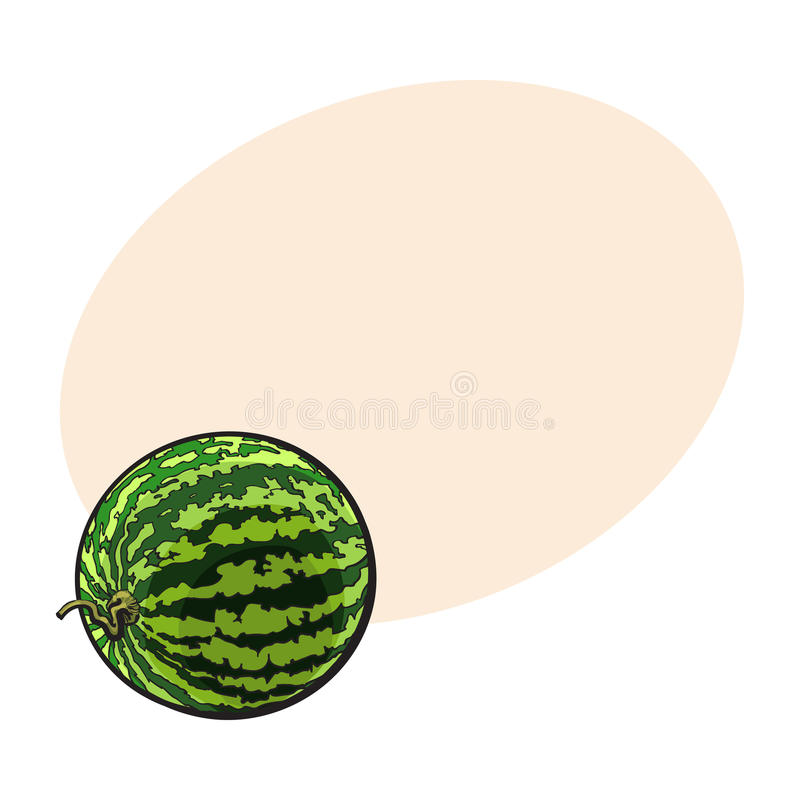 Perfect whole striped watermelon with curled up tail, sketch illustration royalty free illustration